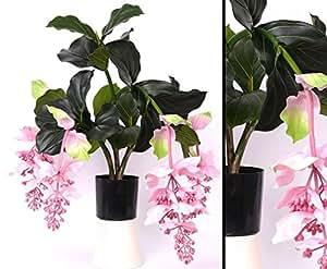 medinilla 4 bl ten h he 80cm im plastiktopf kunsblumen k nstliche blumen kunstpflanzen. Black Bedroom Furniture Sets. Home Design Ideas