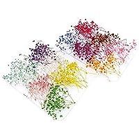 NiceButy 12pzas real de uñas de flores secas Nail Art puntas de DIY Decoración con la caja etiqueta natural con flores Uñas Rhinestones para herramientas de manicura Herramientas y decoraciones
