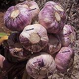 Idée High Live Seeds Ampoule à bulbe d'ail « Early Purple Wight » (Planter Maintenant), 3 Ampoules ou 30 gousses