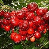 SANHOC 20pcs / Bag ciliegio Nano Ciliegio Bonsai Piante da frutto Piante in Vaso perenni Cerasus pseudocerasus Frutta