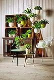 Soendgen Keramik Blumen Hängeampel, Barletta, limette, 18 x 18 x 13 cm, 0626/0018/2061