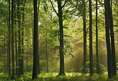 1art1 40585 Wälder - Herbst-Wald 8-teilig, Fototapete Poster-Tapete (368 x 254 cm) von 1art1 auf TapetenShop