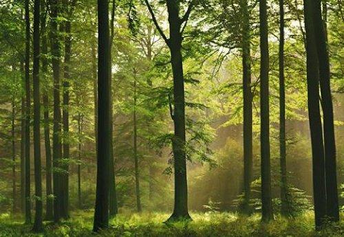 1art1-40585-carta-da-parati-fotografica-motivo-foresta-autunnale-8-unit-dimensioni-368-x-254-cm