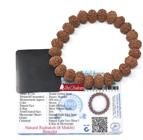 Shri Rudram 8 Mukhi Rudraksha Bracelet/Eight Face Rudraksh Wristlet Java Lab Certified