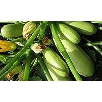 Portal Cool Calabacín Bushy Vegetable Seeds Semillas calabaza de tuétano orgánicos Ucrania 3 Gr Sms0017