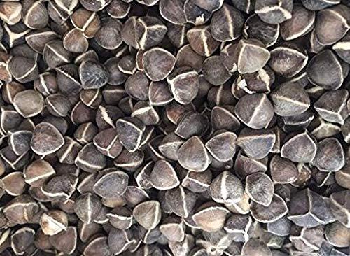 100 Semi di Moringa Oleifera Albero di Bacchetta Puro Organico al 100%