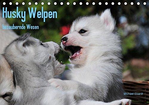 alender 2018 DIN A5 quer): Siberian Husky Welpen sind wahre Schönheiten. Davon kann man sich beim Anblick dieser Bilder überzeugen (Monatskalender, 14 Seiten ) (CALVENDO Tiere) ()