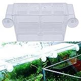 Bruselas08 - Caja de aislamiento para pecera de acuario, para cría de peces, cría, cría