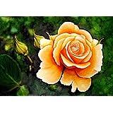 Gelbe Rose, ein handgemaltes und signiertes Originalbild