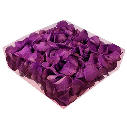 floristikvergleich.de 1l Liter Echte Rosenblätter Violett konserviert – Streukörbchen Hochzeit – Dekoration