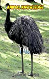 EMU Facts For Kids is an animal facts book for kids ages 3-7: Knowledge about EMU  and with high quality pictures. (English Edition)