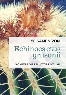 50 frische Samen des Echinocactus grusonii - der Kugelkaktus ist eine beliebte Zimmerpflanze - hochwertiges Saatgut der malerischen Sukkulente - Schwiegermuttersessel