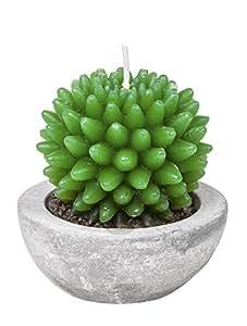 VBS Bougie « Plante succulente »