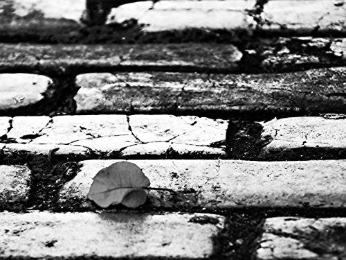 Bilderdepot24 Vlies Fototapete - Rosenblatt auf der Straße - schwarz Weiss - 130x100 cm - mit Kleister - Poster - Foto auf Tapete - Wandbild - Wandtapete - Vliestapete (Schwarz Und Weiß-unkraut-poster)