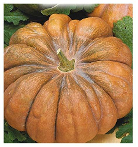 35 c.ca semi zucca mosquee provence - cucurbita moschata in confezione originale prodotto in italia - zucche