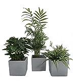 Luftrein Zimmerpflanzen Mix im Scheurich Würfelumtopf grau-stone, 14x14cm, 3...
