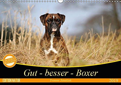 Gut - besser - Boxer (Wandkalender 2019 DIN A3 quer): Boxer, einzigartige Hunde (Monatskalender, 14 Seiten ) (CALVENDO Tiere) -