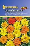 Sperli Blumensamen Schmuckkörbchen Schwefelcosmee, grün