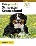 Mein gesunder Schweizer Sennenhund