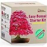 Kit Haga crecer su propio Bonsái - Cultiva fácilmente 4 tipos de árboles Bonsái con nuestro kit de semillas de Bonsái complet