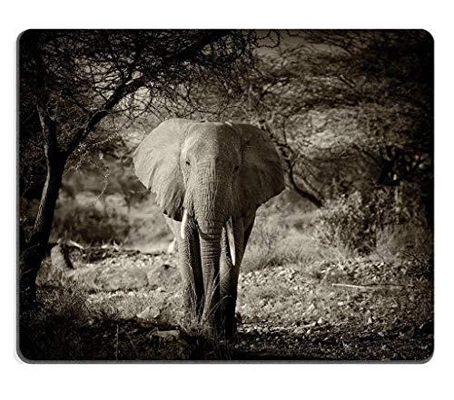 Naturkautschuk Gaming Mousepad Elefant im Wilden Nationalpark Kenia (Mauspad/Gaming-Mauspad)