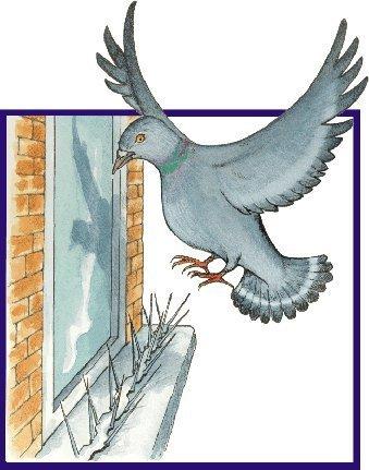 birdban-pinchos-para-ahuyentar-a-pjaros-paquete-de-2m-tiras-de-6-x-330mm