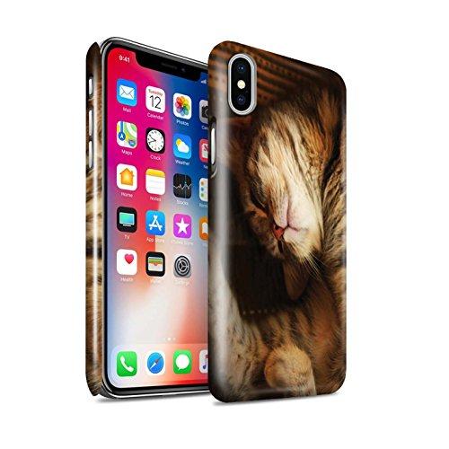 Officiel Elena Dudina Coque / Clipser Brillant Etui pour Apple iPhone X/10 / Jacinthe Design / Les Animaux Collection Endormi/Tigré Chat