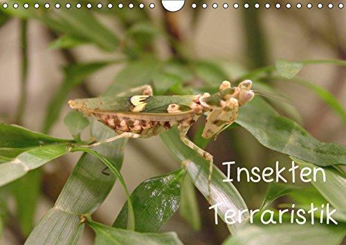 Insekten Terraristik (Wandkalender 2015 DIN A4 quer)