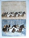 Doppelkarte mit Umschlag, Wildpferde, 90034, Bild, Pferde, Karte, Karten