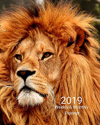 2019 Weekly and Monthly Planner: Strong Lion Daily Organizer -To Do -Calendar in Review/Monthly Calendar with U.S. Holidays-Notes Volume 1 -