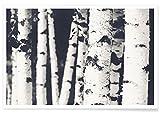 """JUNIQE® Poster 20x30cm Schwarz & Weiß Wälder - Design """"Birches"""" (Format: Quer) - Bilder, Kunstdrucke & Prints von unabhängigen Künstlern - Kunst von Wäldern und Bäumen - entworfen von Monika Strigel"""