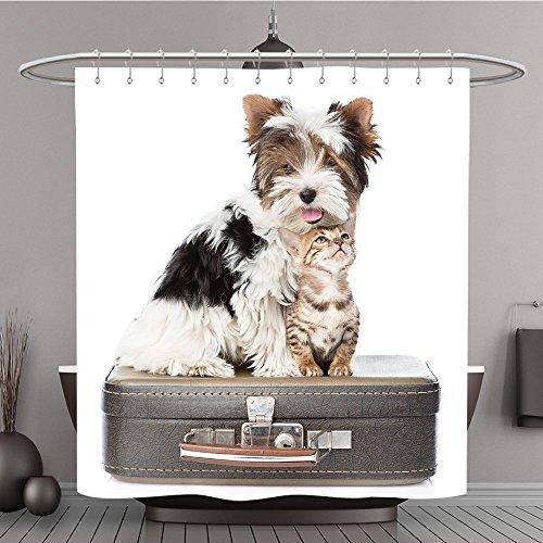 Auf Welt Potter Zauberstäbe Harry (Duschvorhang 270440549Biewer Yorkshire Terrier und Bengal Katze sitzend auf einer bag. isoliert auf weiß Polyester-Hintergrund-Bad)