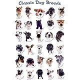 Perros–Póster–Classic Dog Razas + Póster sorpresa