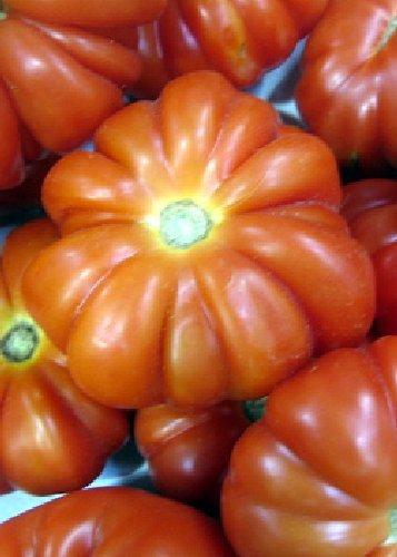 Tomate Tomate Costoluto