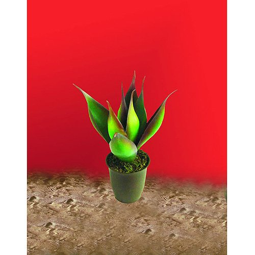 Euro Palms 82809031 Lotus-Agave, 34 cm