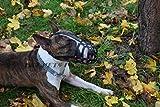 Robusto collare semistrozzo per cane, con catena su 2 e 3file, in...