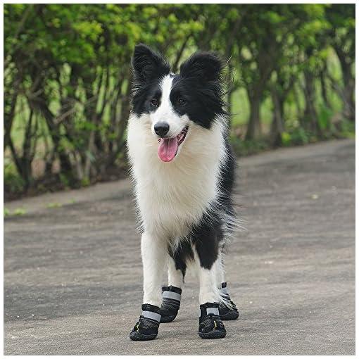 Antiscivolo Royalcare Cani Scarpe Scarpe Impermeabili Per 4pcs CzqAXRqxw ... 1bc1a65e0c2