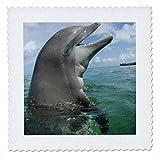 3drose Bottlenose Dolphins, Karibik,