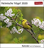 Heimische Vögel Kalender 2020: Kalender mit 53 Postkarten