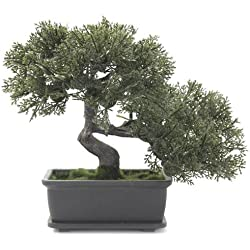 Euro Palms 82600111 Bonsai 21 cm