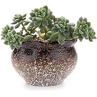 MuciHom Planta Maceta de Suculento Marrón 9.7CM, Cactus Maceteros de Ventana Cajas Decoración para Mesa de Comedor Sala de Estar Idea Regalo para Cumpleaños y Boda Navidad