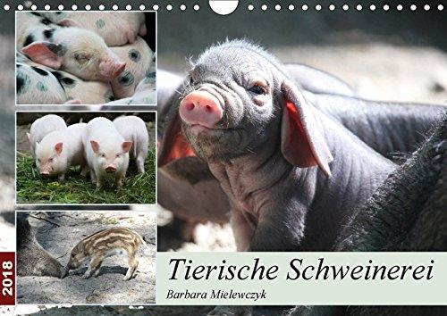 Tierische Schweinerei (Wandkalender 2018 DIN A4 quer): Schweine findet man als Haustiere - aber auch als Wildtiere. (Monatskalender, 14 Seiten ) ... [Kalender] [Apr 13, 2017] Mielewczyk, Barbara (Schwein Ferse)