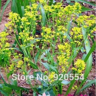 Pinkdose Hot vente 10pcs Couleurs mélangées Pivoine Fleur spéciale Chine Pivoine bricolage jardin maison Livraison gratuite: 18