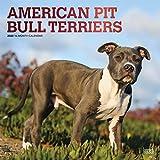 American Pit Bull Terriers 2020 - 16-Monatskalender mit freier DogDays-App: Original BrownTrout-Kalender [Mehrsprachig] [Kalender] (Wall-Kalender)