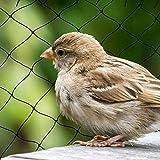 Rete anti-uccello extra forte, 10 15 20 25 30 m Largo x 5 M Rete a nido d'ape Giardino 2x2cm