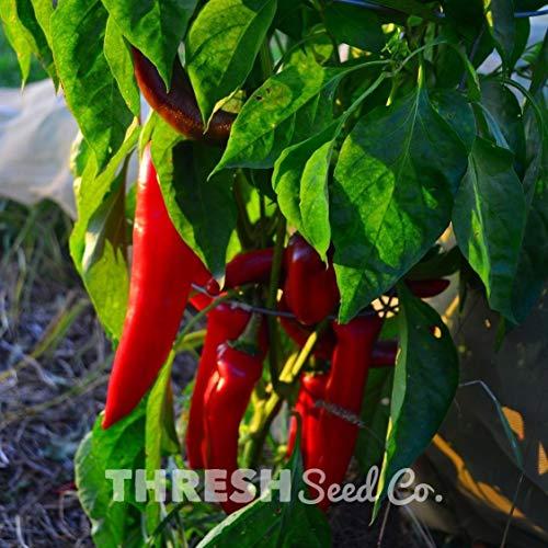 PlenTree Hot Pepper - NuMex Big Jim - 20 Herencia Samen + Geschenk