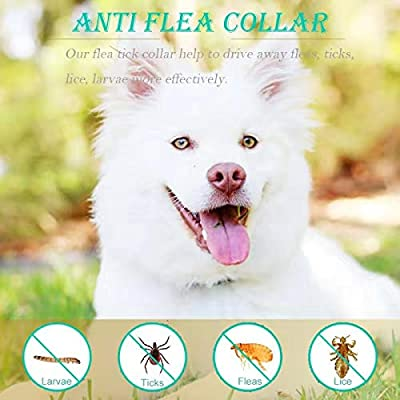 Jane Choi Anti Flea Collar for Dog, 2 Set Waterproof Anti Flea, Lice & Tick Dog Collar, 25 inch 8 Months Effective Control Flea and Tick adjustable Collar for Small Medium Large Dogs by Blue Maly