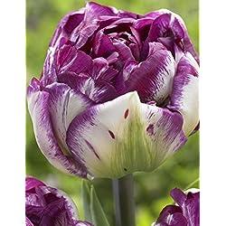 Keland Garten - 100 stück Tulpensamen Blumensamen Tulpen Ice Cream Mischung samen winterhart mehrjährig mehrfarbig (5)