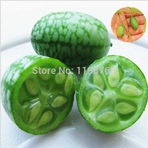 20pcs Gemüse und Fruchtsamen Mini Wassermelone Seeds Geschmack wie Gurken Bonsai Pflanzen Samen für Heim & Garten (Wassermelonen-gurken Samen)