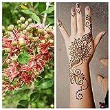 Lawsonia inermis, Henna, schöne Blühte, 10 Samen
